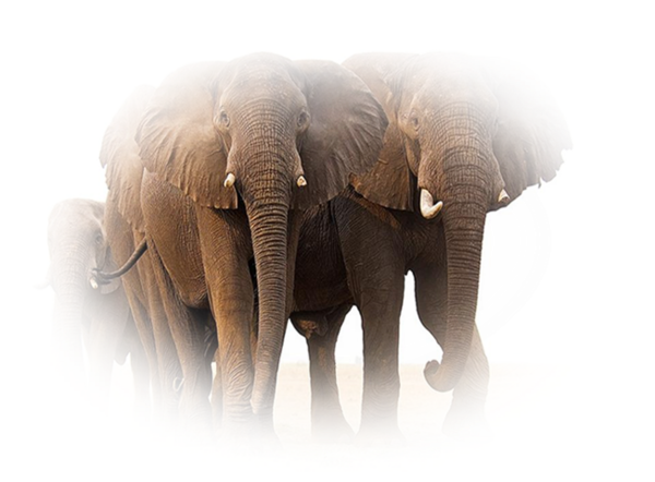 elephnat tube