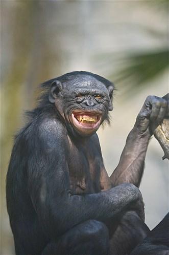 site de rencontre bonobo